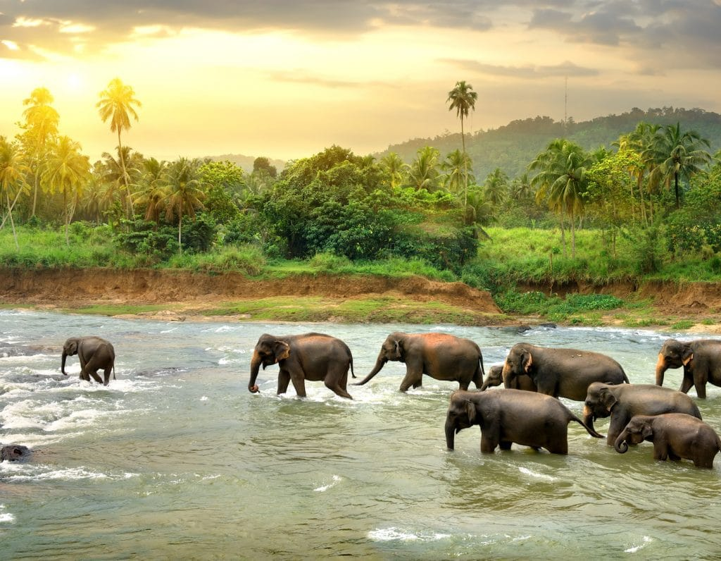 travel family-friendly Sri Lanka
