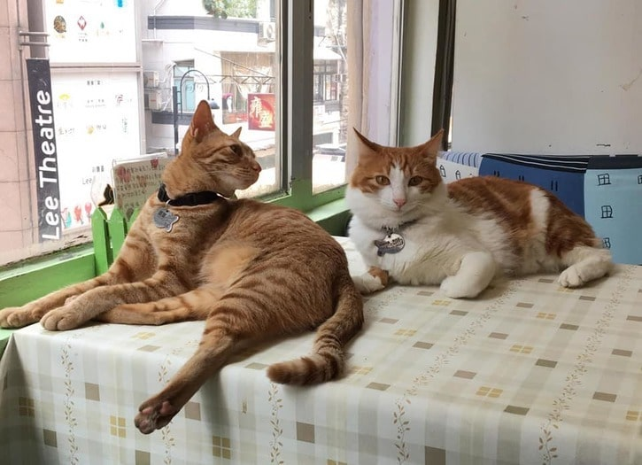 cat island cat store Hong Kong see animals whats on