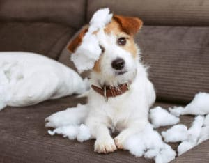 common pet problems behavioural medical family life featured