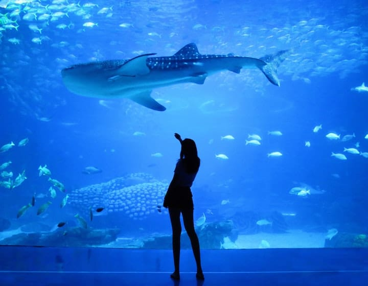 aquarium virtual tours learn travel